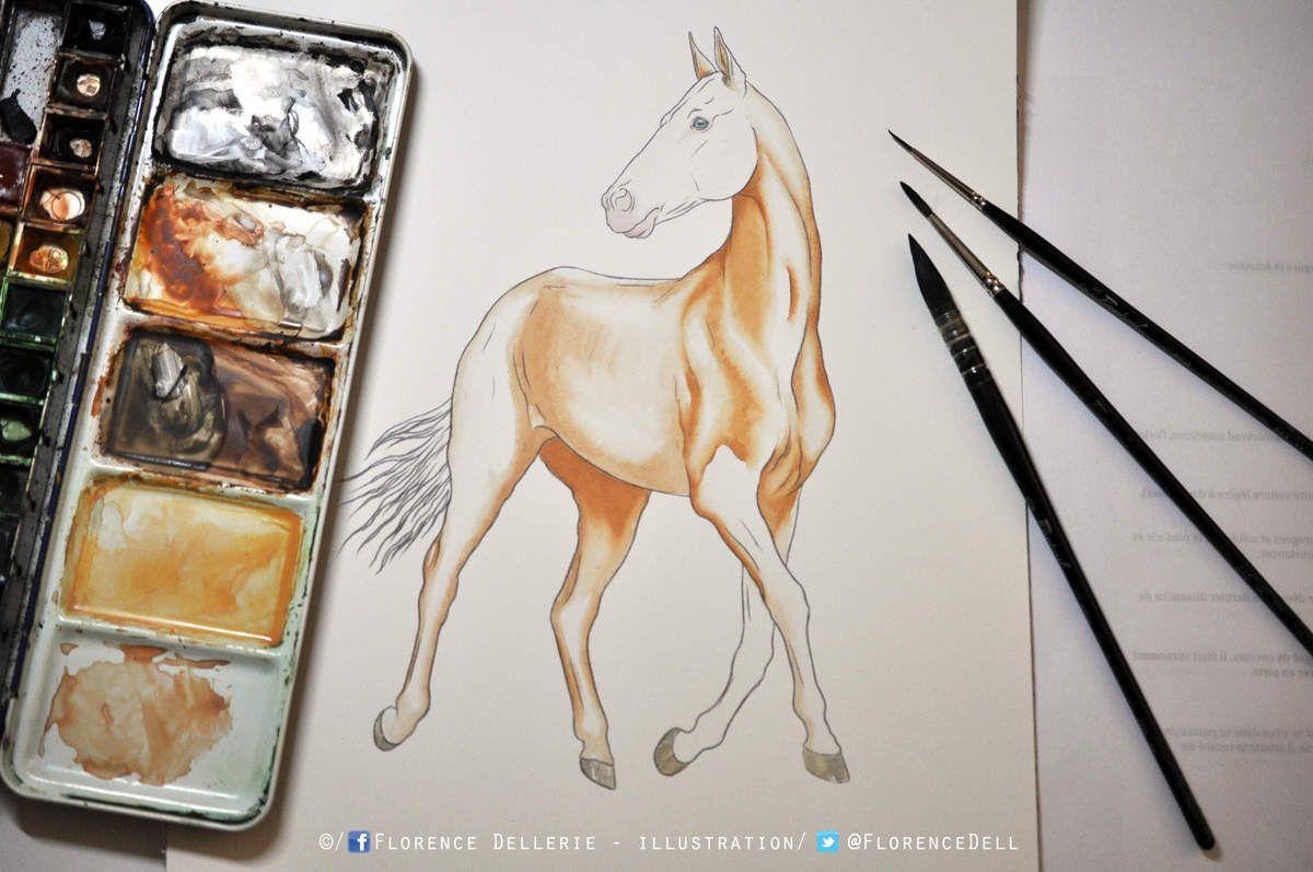 Illustration documentaire en cours : cheval Akhal-teke à l'aquarelle