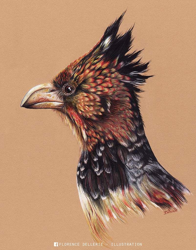 Illustration d'oiseau, crayons et aquarelle : Barbican promépic