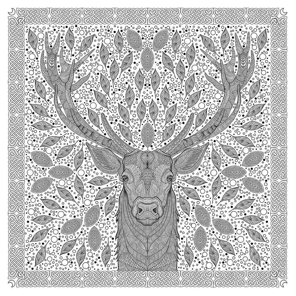 Illustration à colorier - Forêts imaginaires chez Hachette