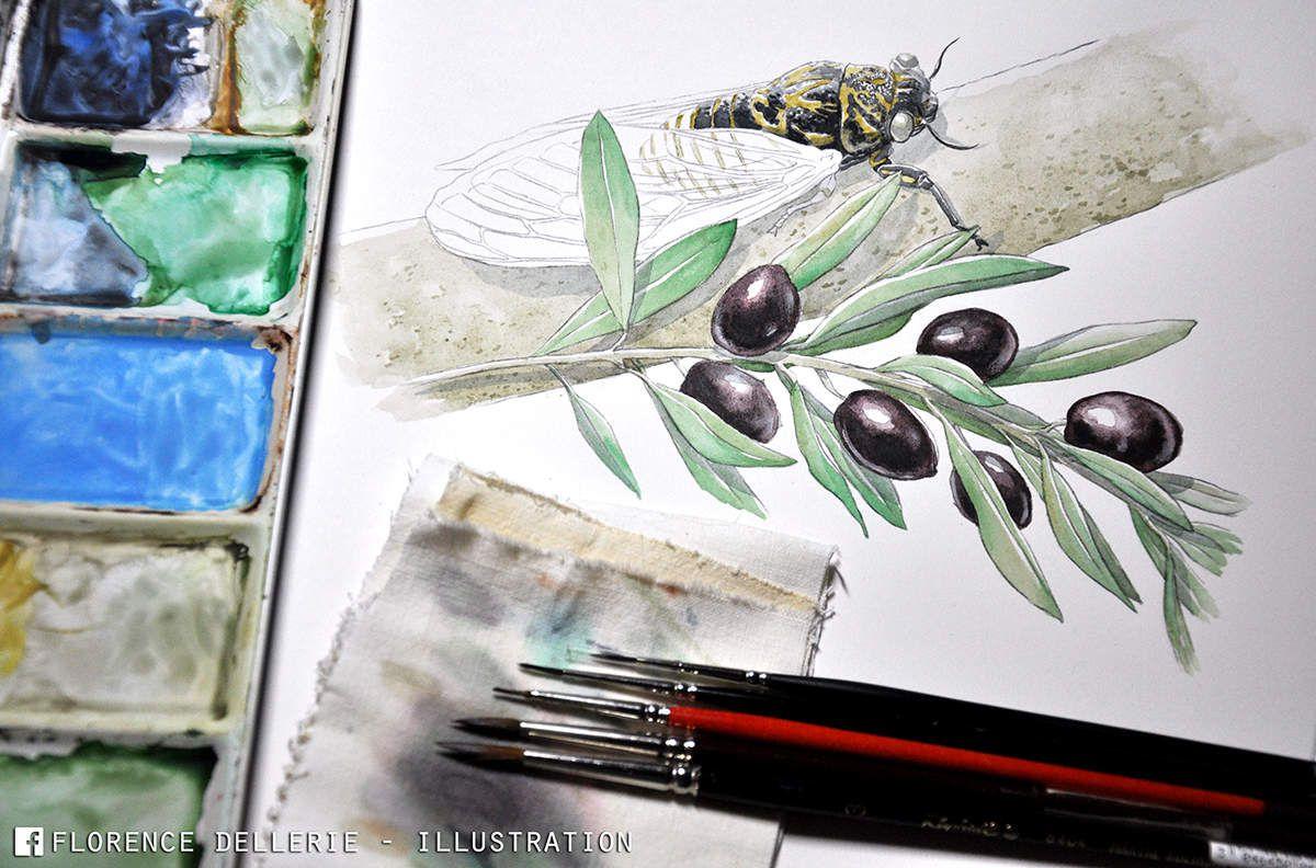 Illustration à l'aquarelle : Cigale sur olivier en Provence