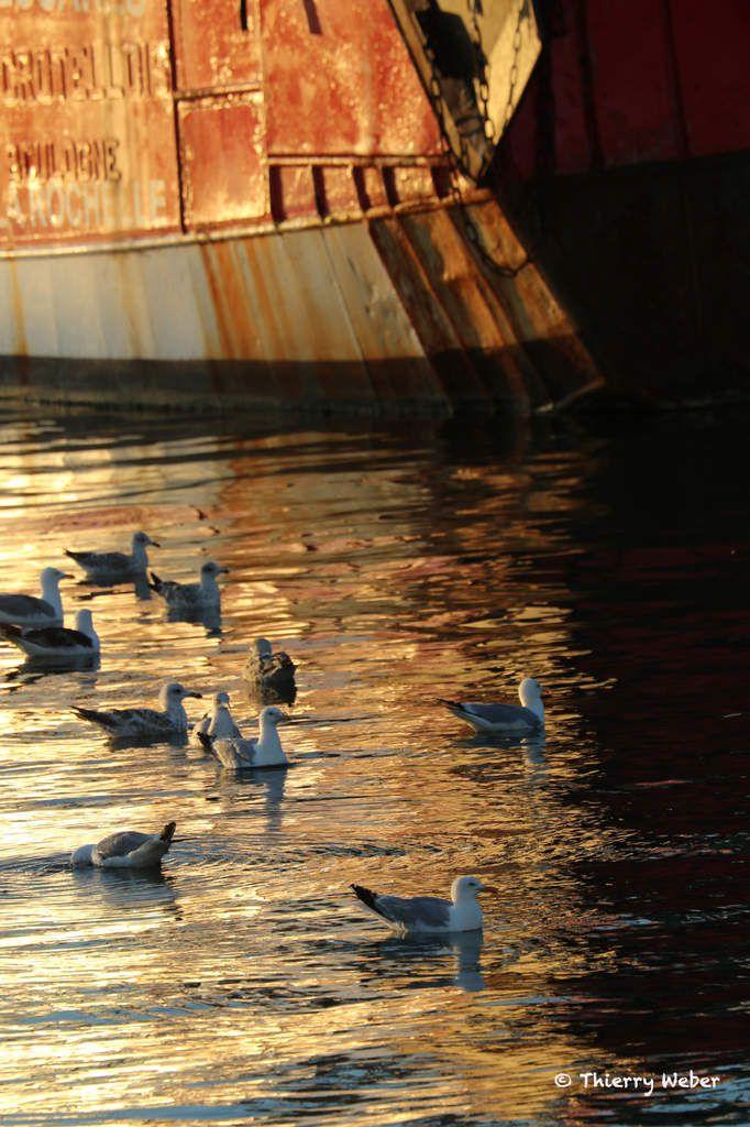 Un soir d'été sur le Port de Pêche de La Turballe