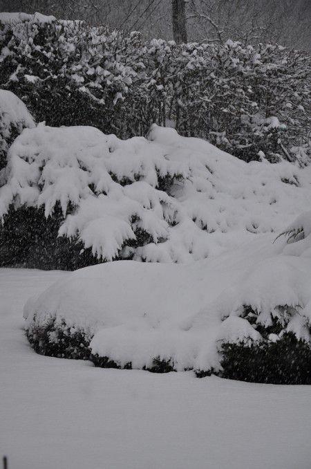 ambiance d'un jour d'hiver