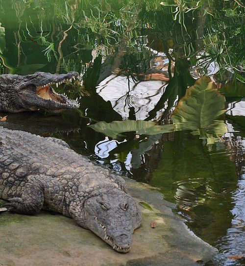 un jardin tropical et ses grosses bébêtes...