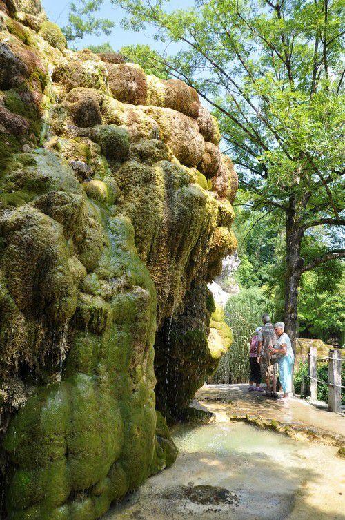 Symphonie florale, paradis botanique rythmés par le doux clapotis de l'eau