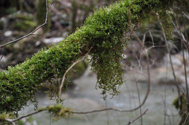 une forêt verte...