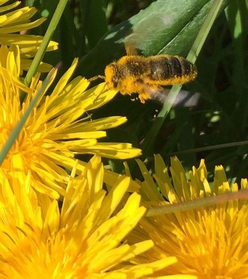 orgie de pollen