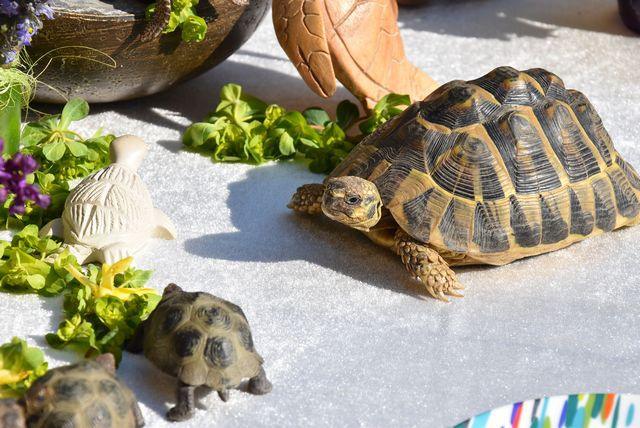 "Ma table ""les tortues accourent"" ...."