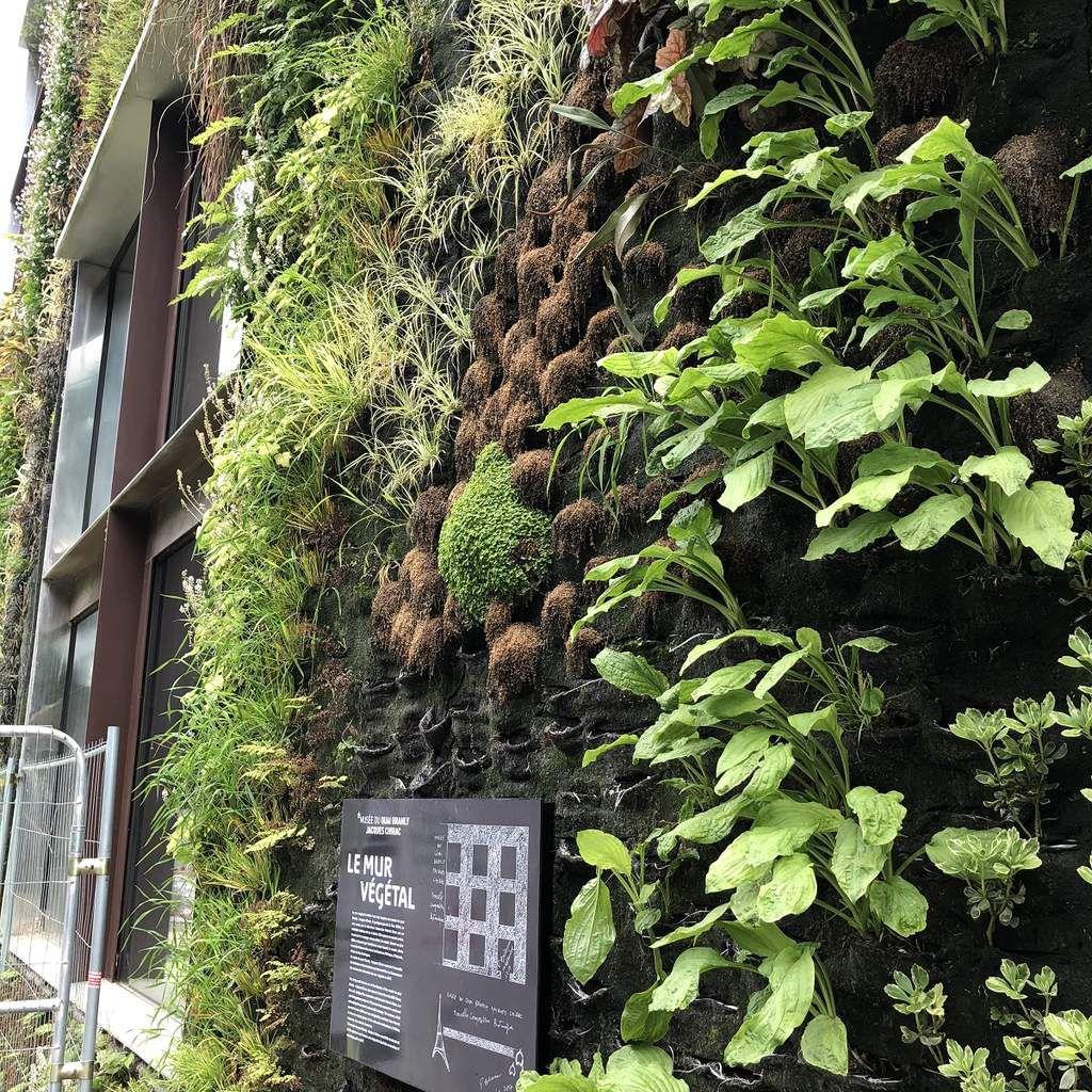 Plantes Pour Mur Végétal Extérieur le mur végétal du musée du quai-branly à paris -