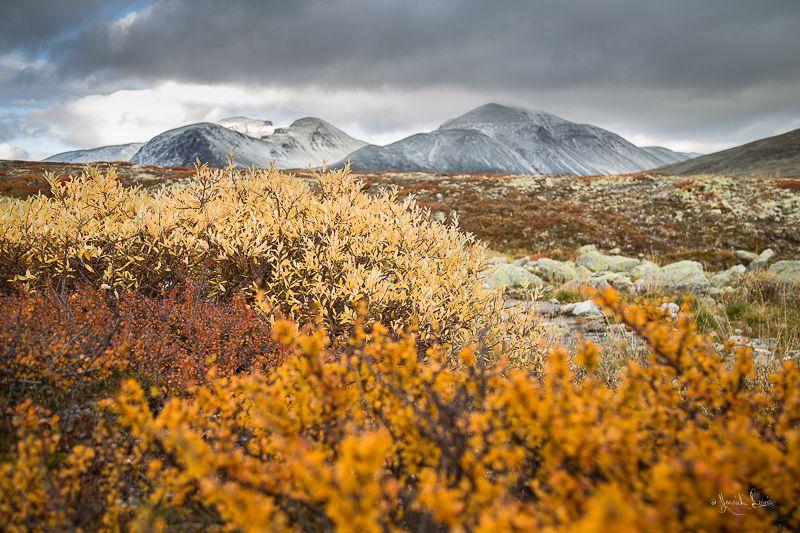 La toundra en automne © Yannick Lenoir