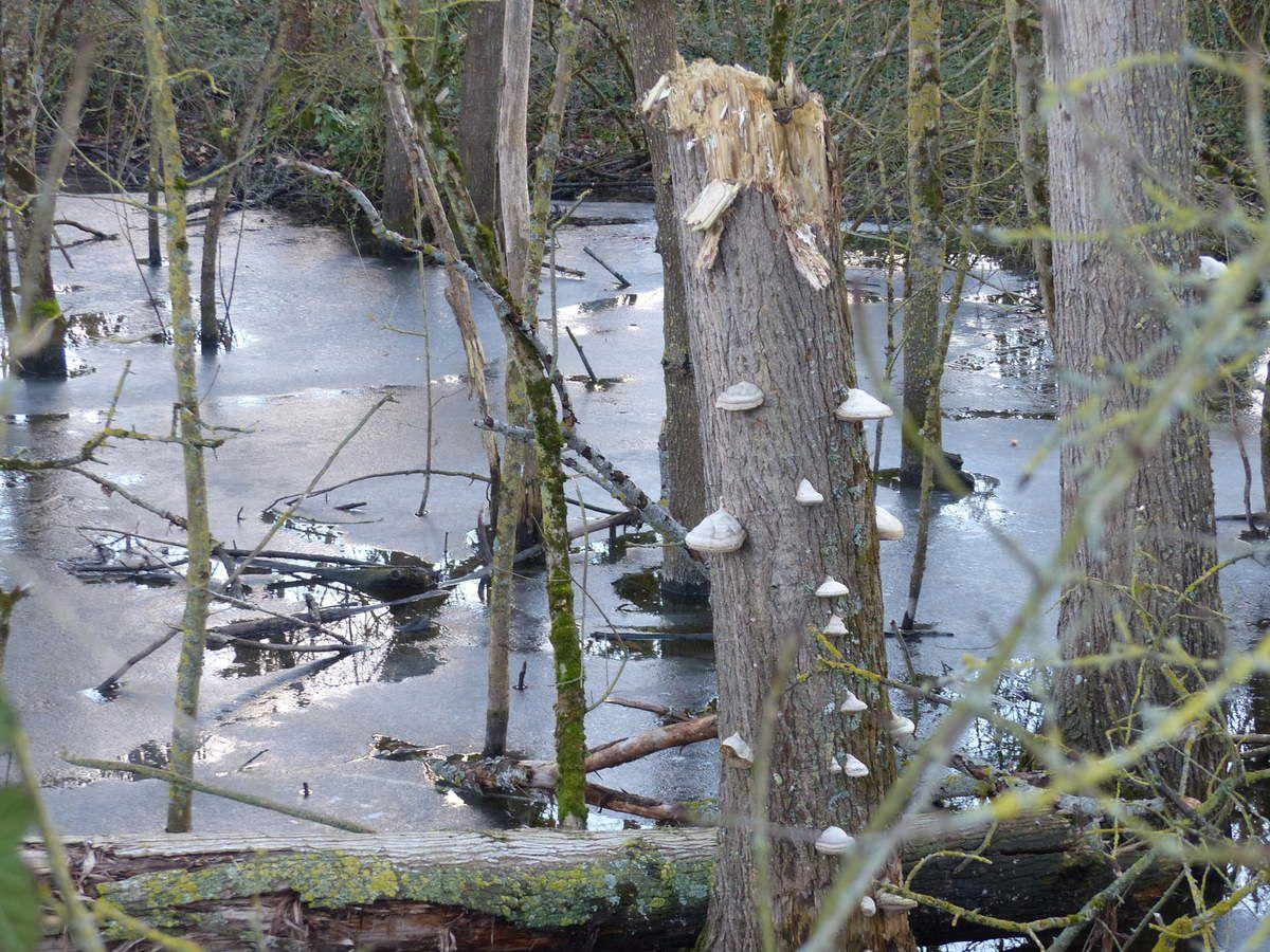 La glace était encore présente à la surface de l'eau côté berges et le lac de rétention d'eau situé le lon de la rivière était, lui, encore quasi entièrement gelé. Quelques photos par un après midi ensoleillé.
