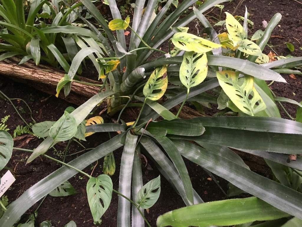 Parc floral : La Guyane 12eme