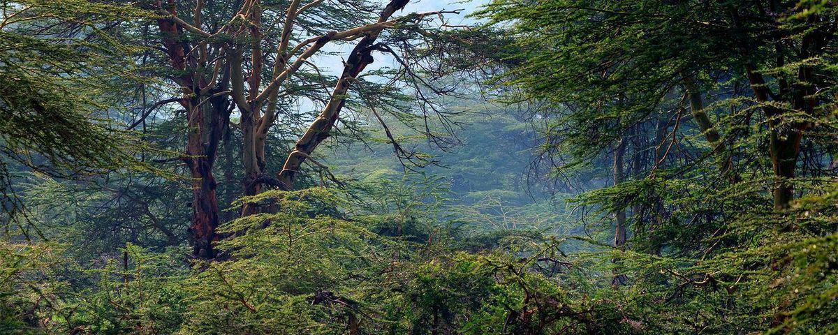 La forêt primaire de Nyungwe. © Yakov Oskanov / 123RF