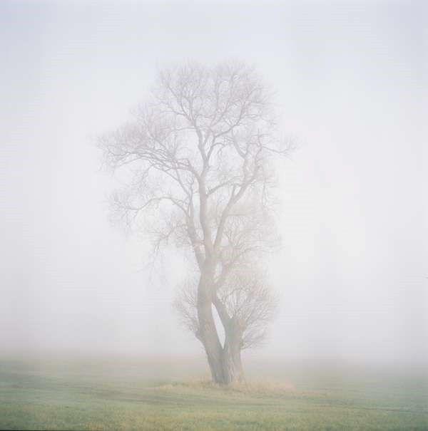 Baum 1533/4, image extraite de la série Baum, 2017. ANNE SCHWALBE