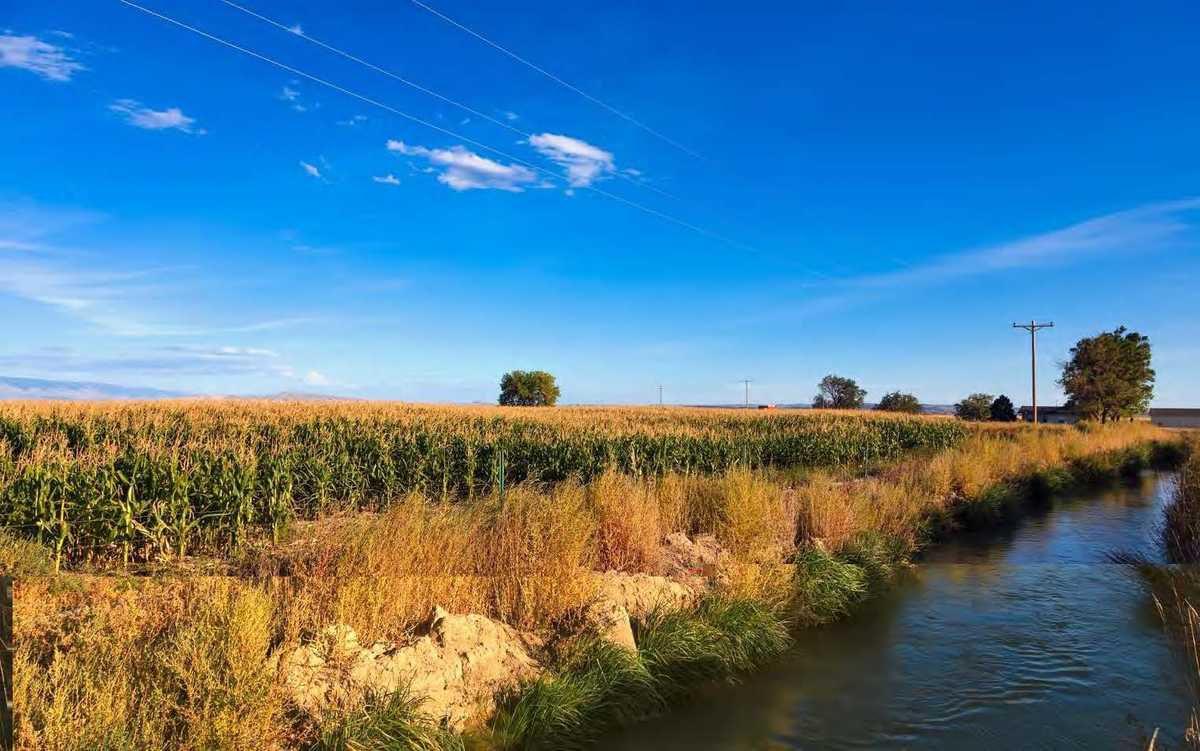 Les pesticides perturbateurs endocriniens présents dans les eaux de surface en France