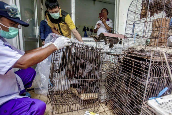 Des officiers sanitaires inspectent des chauves-souris confisquées et sur le point d'être abattues, à Solo (Indonésie), le 14 mars. AP