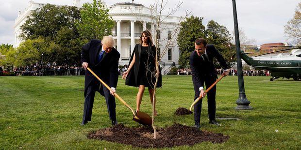 Trump et Macron plantant l'arbre français sous les yeux de Melania Trump, à la Maison-Blanche. © Reuters