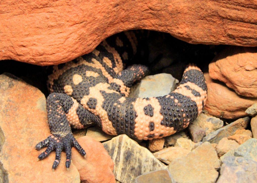 75 Animaux désert SONORA - Arizona