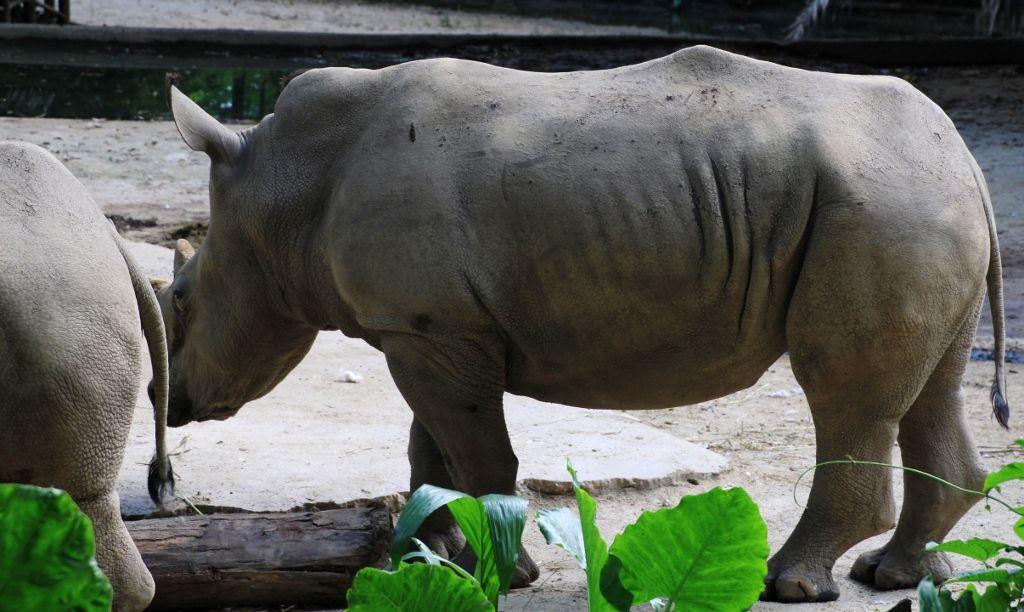 81 Zoo de Singapour