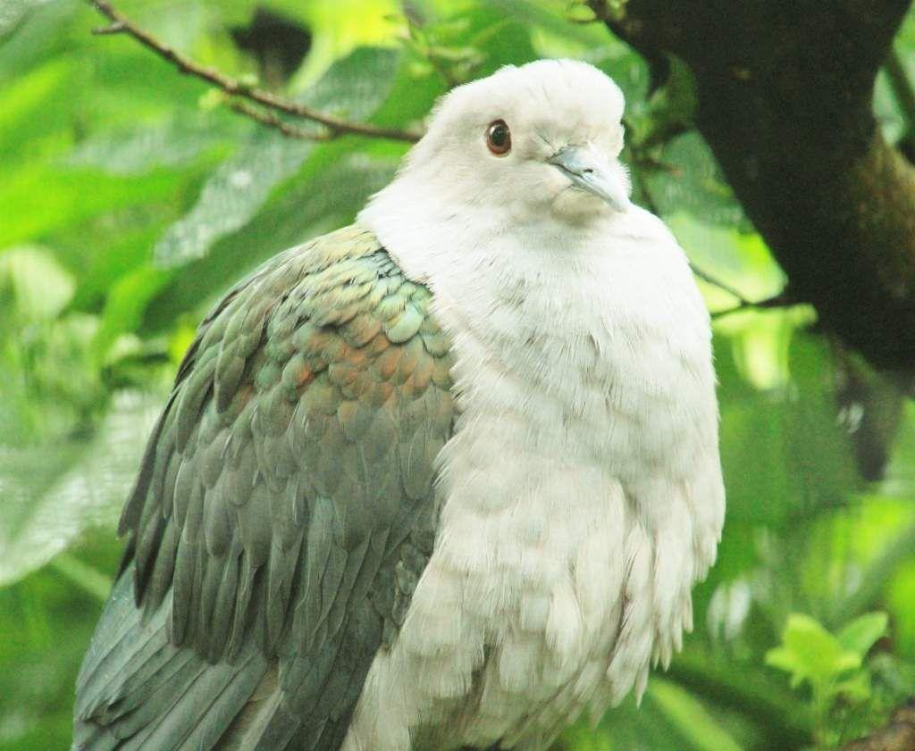 81 Oiseaux exotiques zoo Singapour