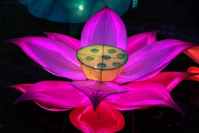 Europa park lumières chinoises Père Noel et les fleurs