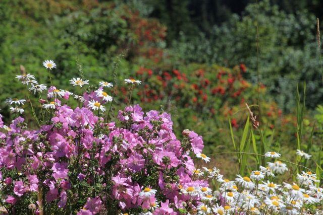 Sculptures et fleurs au mont GROUSE : Colombie Britanique Canada