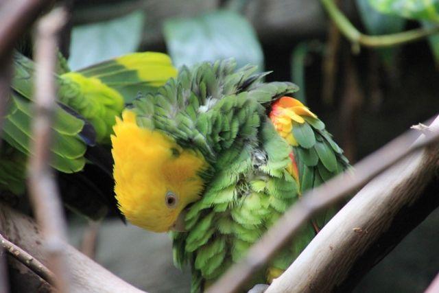 75 Perroquets Vancouver