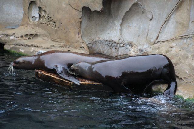 75 Aquarium VANCOUVER