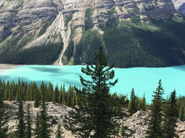 Lac Peyto - dans les rocheuses - Province Alberta - Canada
