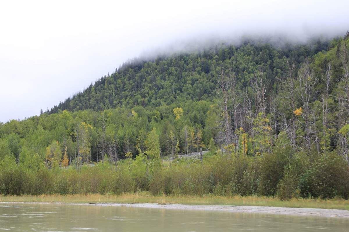 84 Elans et aigles - Alaska
