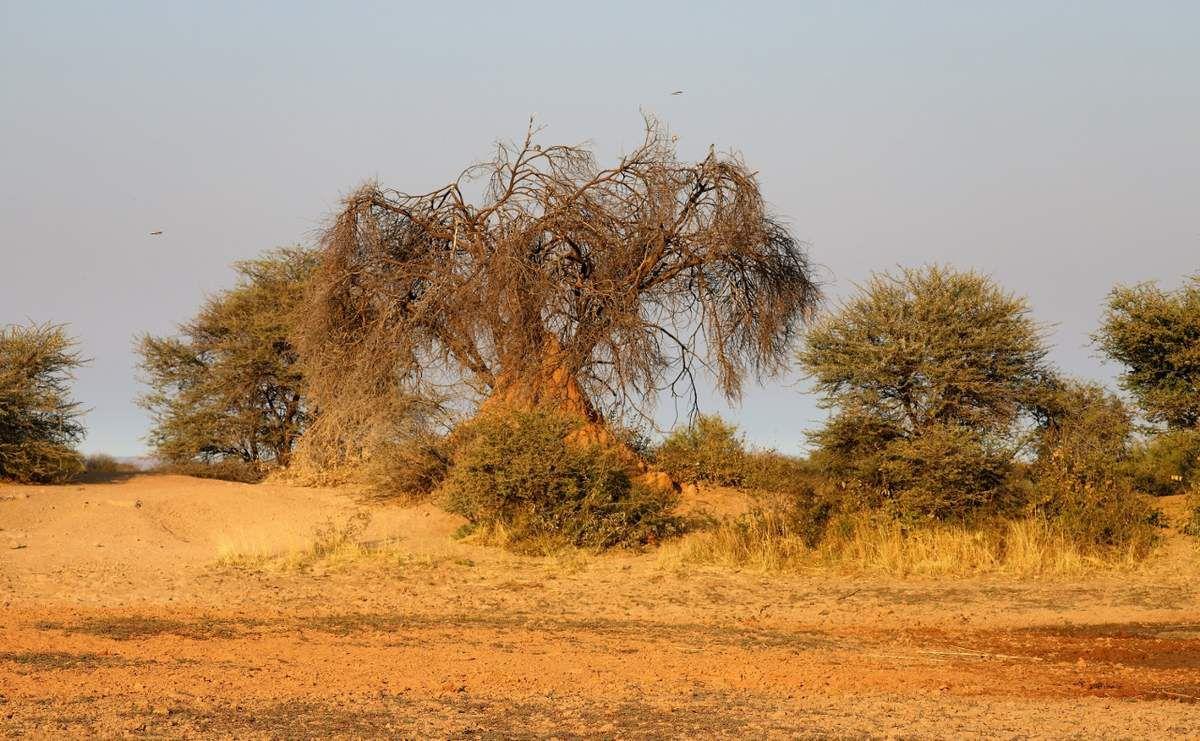 Réserve Okonjima - Namibie