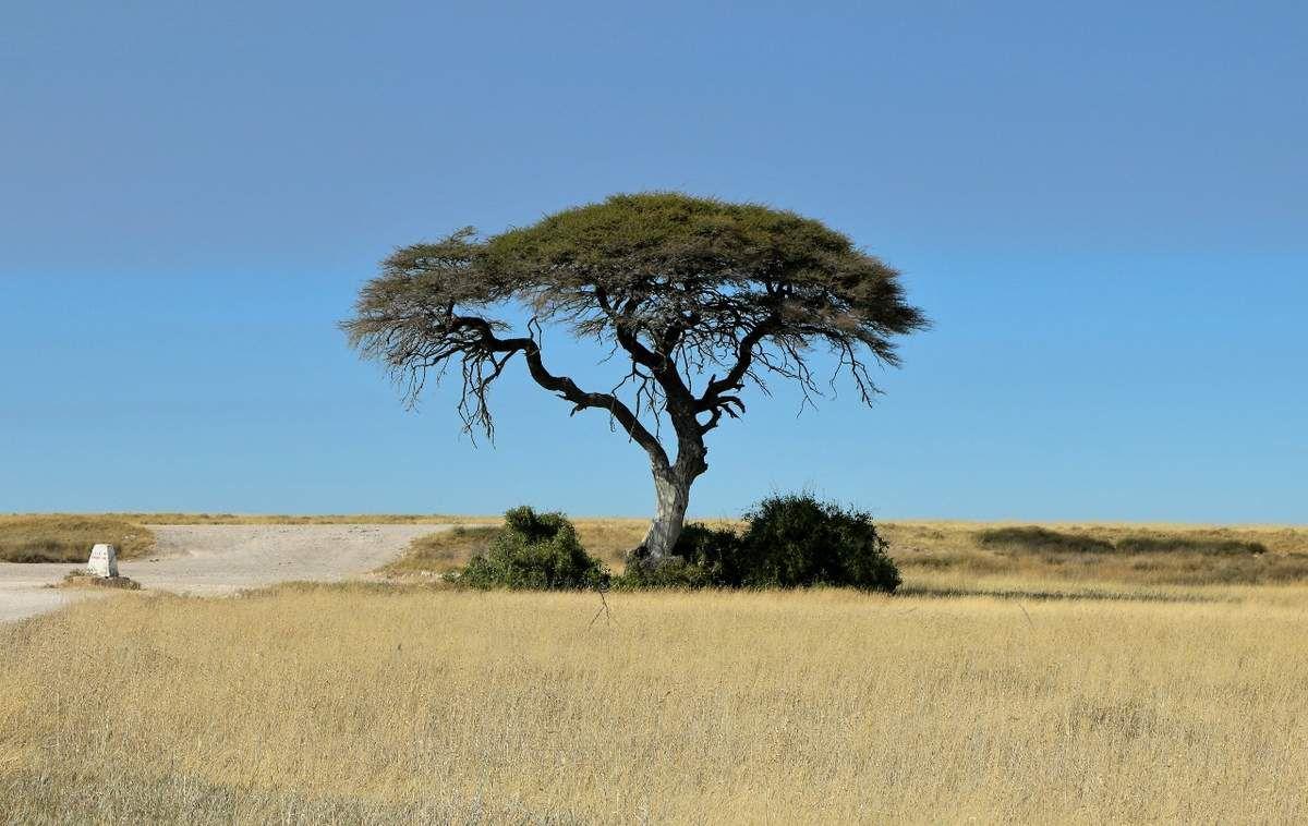 Parc Etosha Namibie