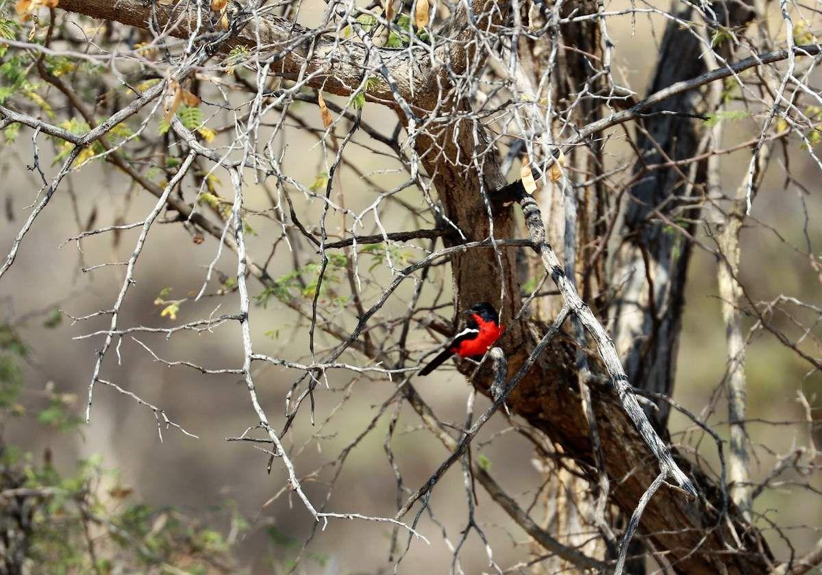 78 Oiseaux  Namibie