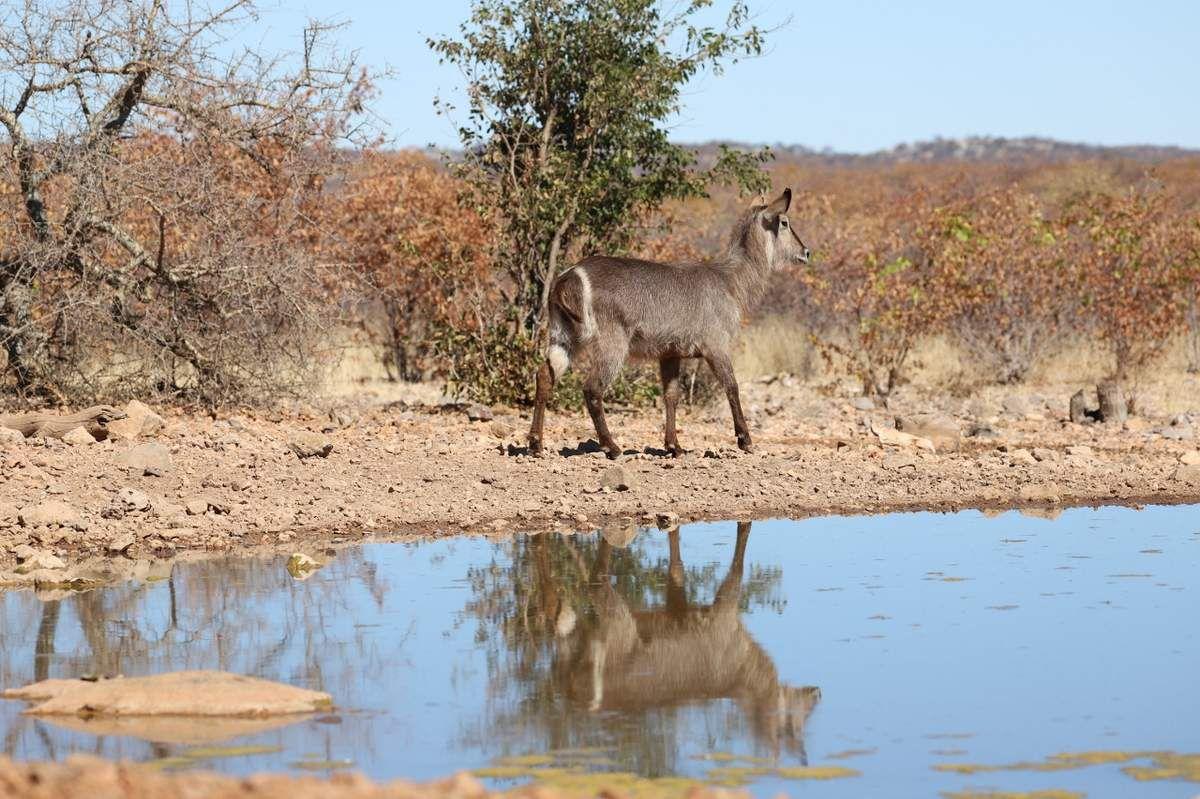78 Au bord eau Namibie