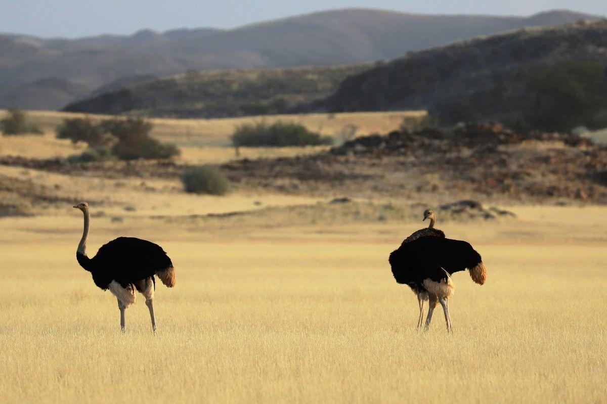 Le Damaraland en Namibie