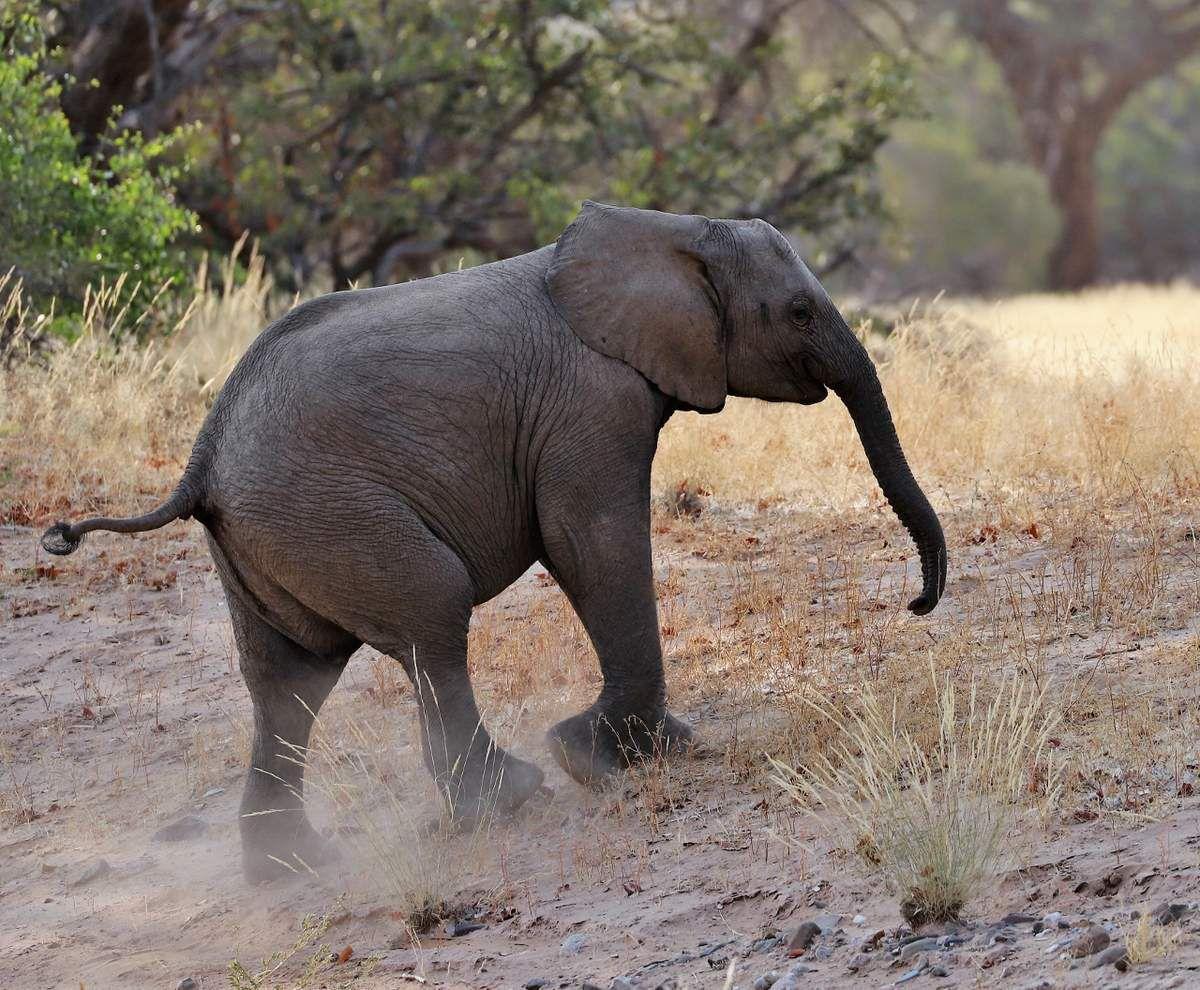 78 Eléphants Namibie