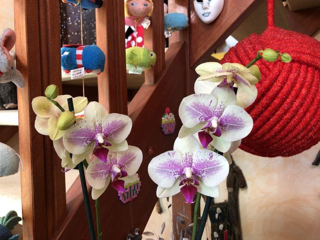 Mes fleurs d'amour