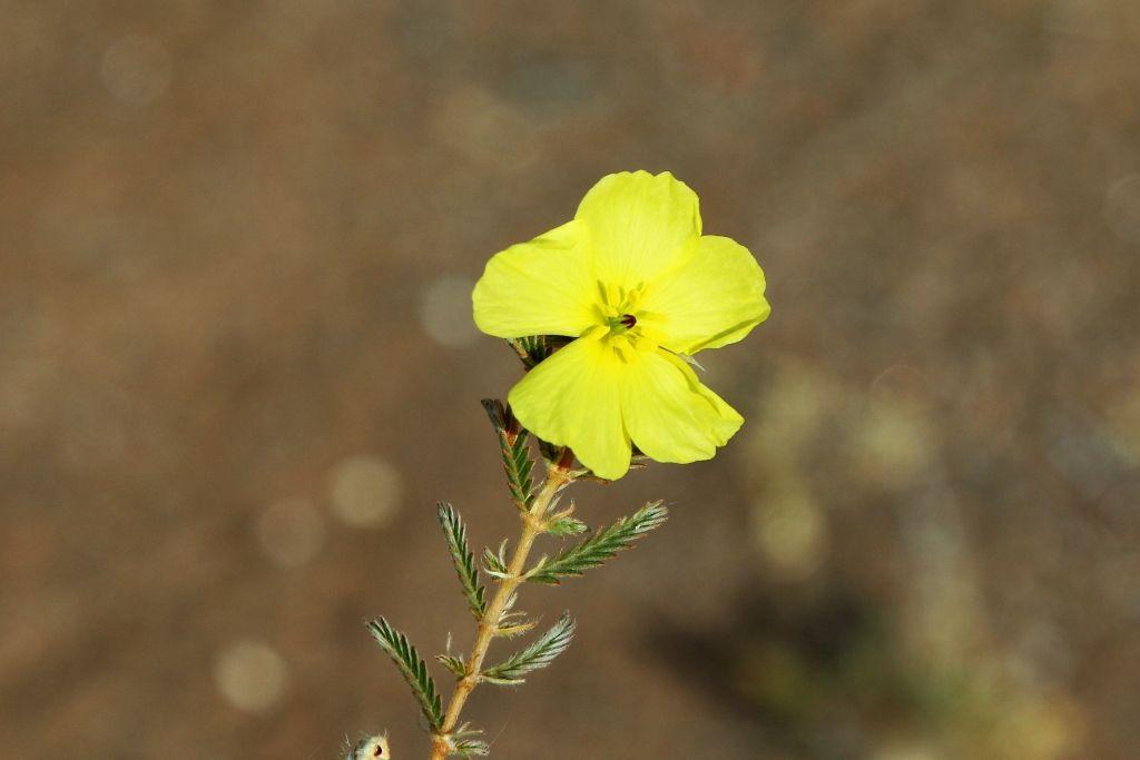 Les fleurs et des nids en Namibie