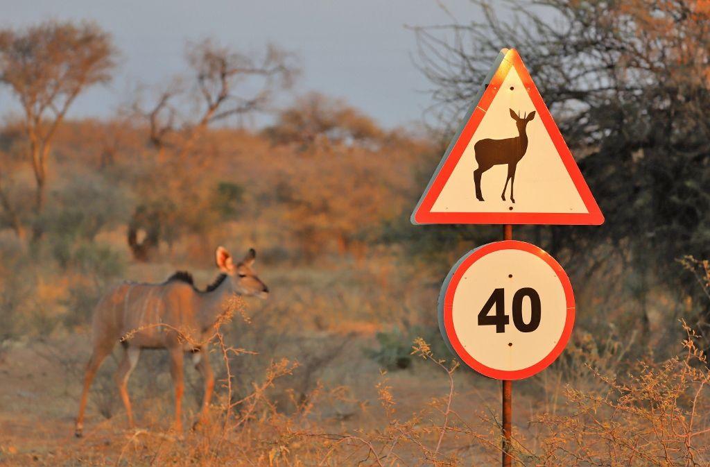 Panneaux insolites en Namibie