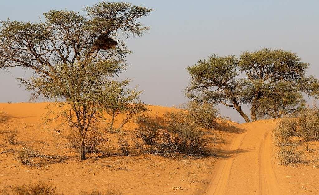 78 Gnous Namibie
