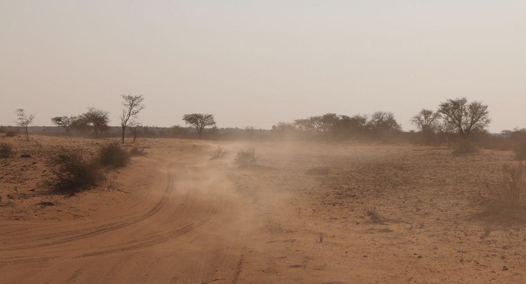 78 Safari desert Kalahari Namibie