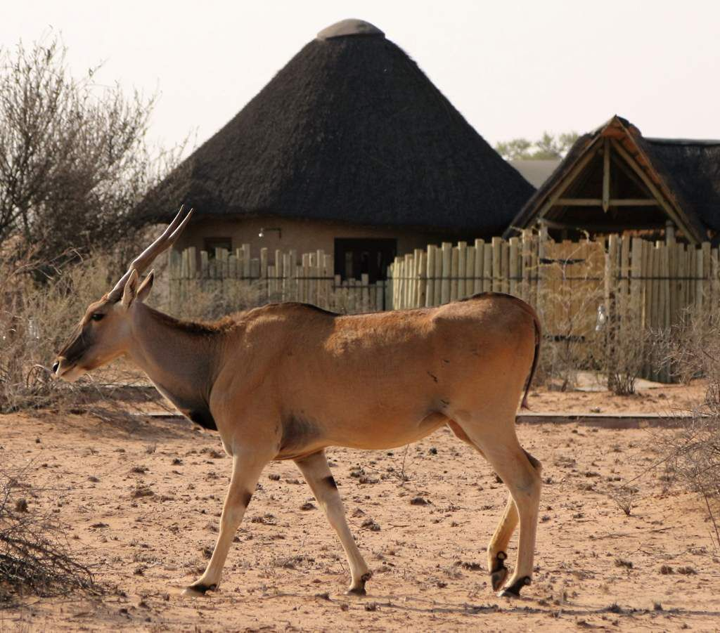 Kalahari red dunes lodge - Namibie