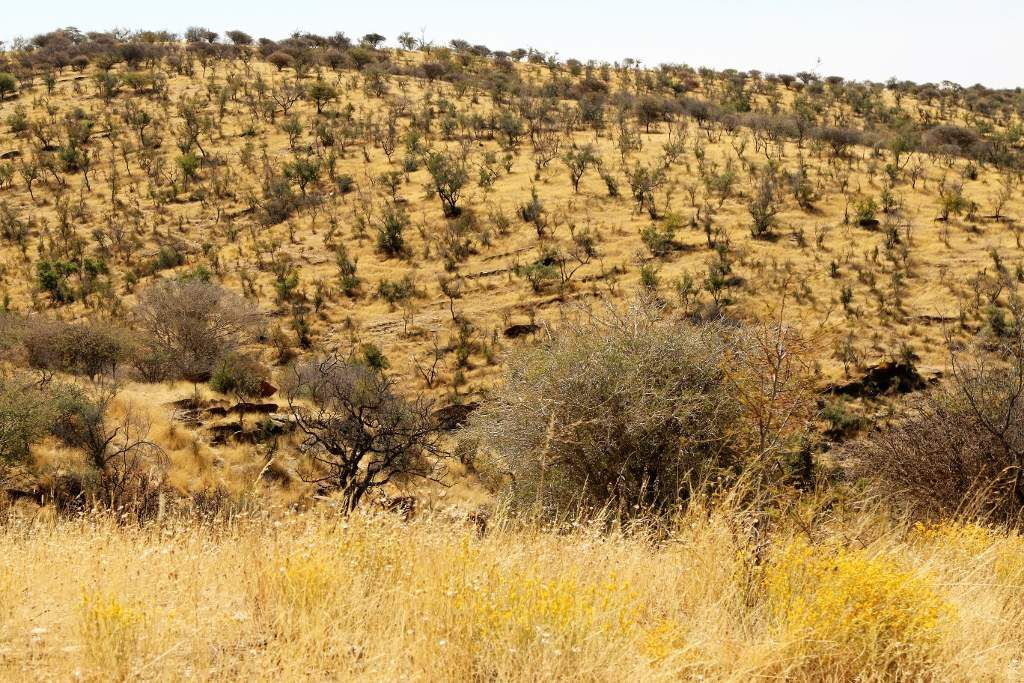 Réserve Daan Viljoen Wildpark Namibie
