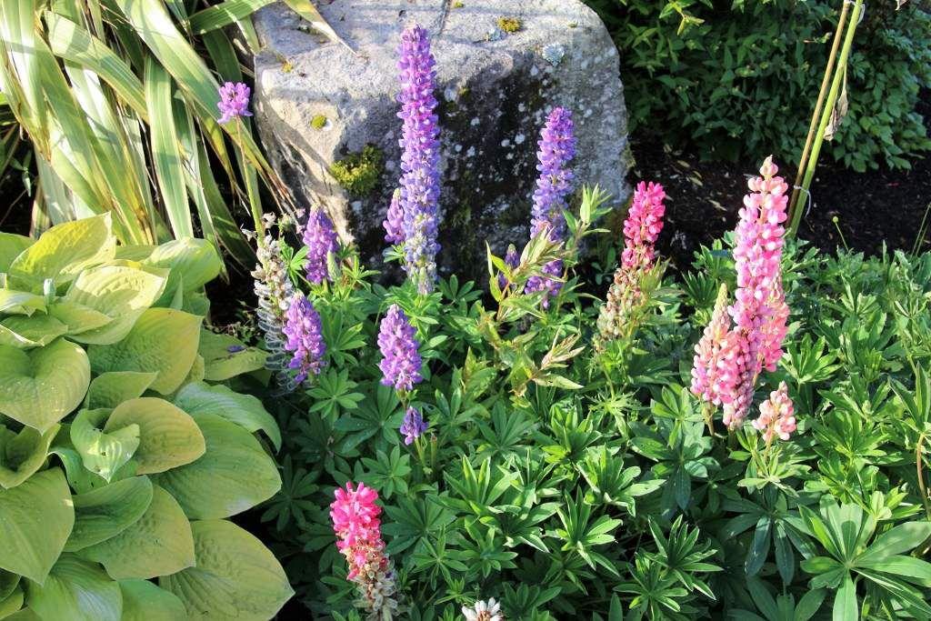 Fleurs en Irlande