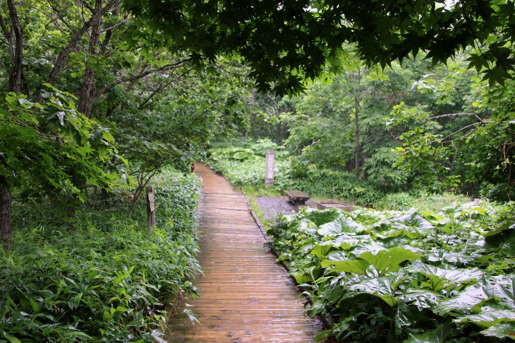 Parc national Shitsugen Kushiro JAPON