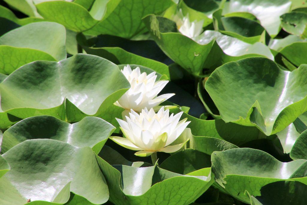 Jardin Hirosaki Japon Ile Honshu
