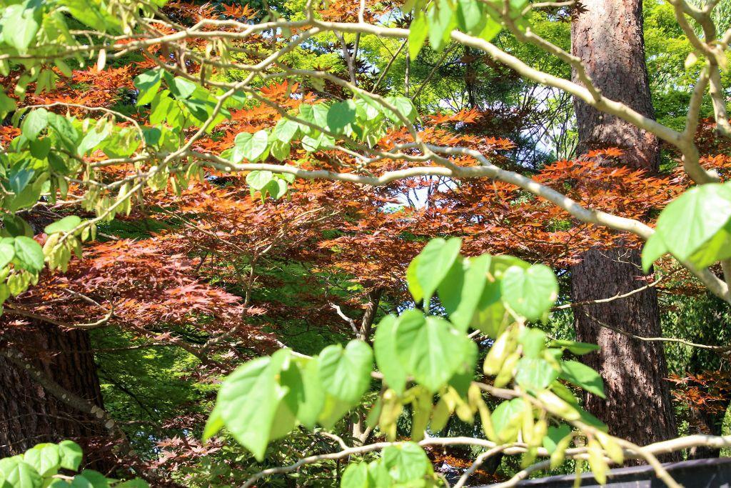 Kakunodate ville Samourai Ile Honshu Japon