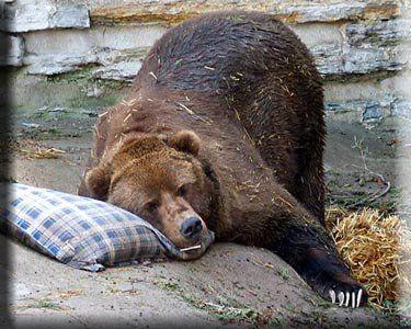 hibernation....