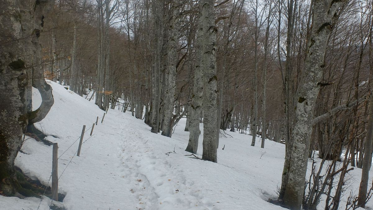 Sur le plateau seul les forets on gardé leur neige.