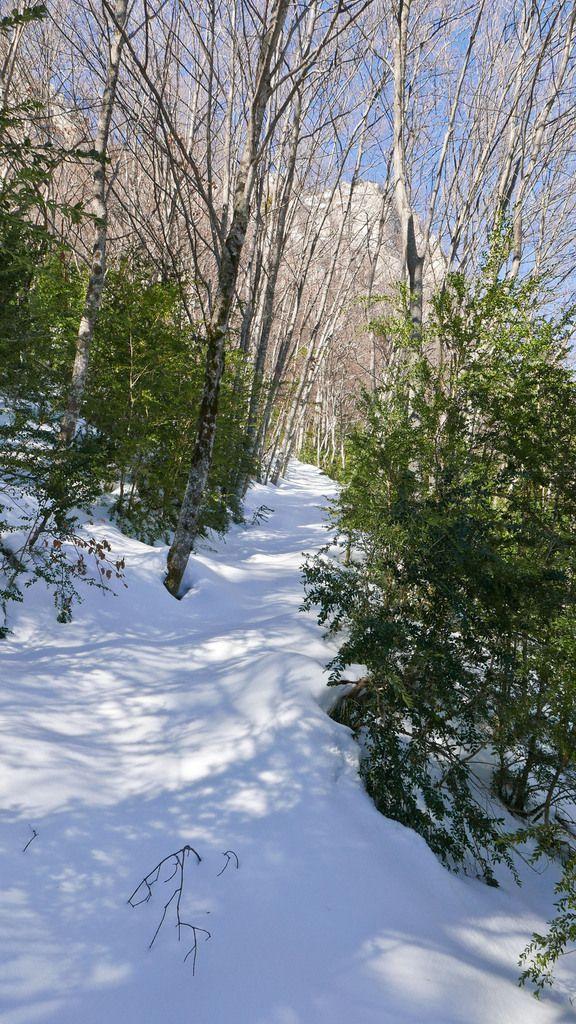 La piste forestière suffisamment enneigée pour utiliser les skis. Le sentier suffisamment large malgré quelques arbres.