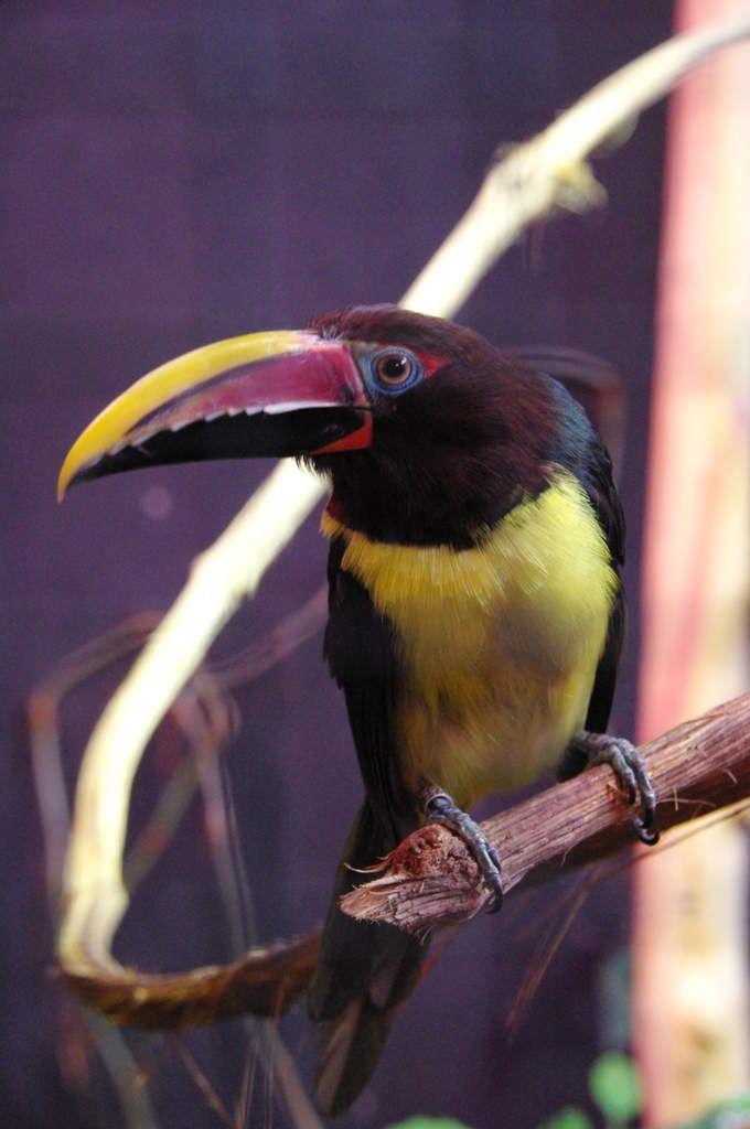 Visite du parc des oiseaux (Ain)